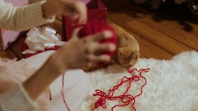 Girl playing with a kitten. Red ball of thread. Christmas gift. Home comfort. Girl playing with a kitten. Red ball of thread. Christmas gift. Home comfort stock video footage