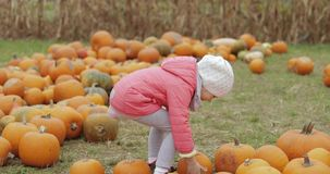 Girl playing with pumpkins in garden stock video footage
