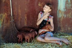 The girl is playing with red newborn pigs of the Duroc breed. The concept of caring and caring for animals Stock Image