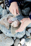 Girl playing with Sea Rocks in Landudno Stock Image