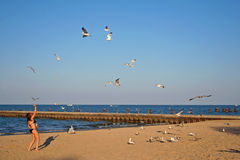 Girl playing with seagulls at Chicago beach Royalty Free Stock Photo