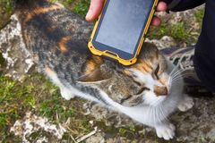 Girl playing on smartphone song for his beloved cat. Cat purrs in response Royalty Free Stock Photography