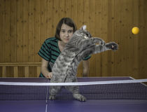 Girl playing table tennis with a cat Royalty Free Stock Photo