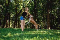 Girl playing tug of war with her dog and a stick royalty free stock images