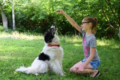 Free Girl Playing With Dog On Grass. Teenager Hugging Carpathian Shepherd Dog In The Summer Park. Friendship Concept Of Man And Animal Royalty Free Stock Photography - 151010287