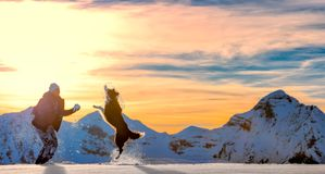 girl plays with border collie in the snow Royalty Free Stock Images