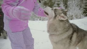 Girl plays with dog in the snow stock footage
