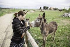 Girl plays Donkey Stock Photography