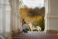 Girl plays with her dog in fallen autumn leaves. Girl plays with her husky dog in fallen autumn leaves stock photos
