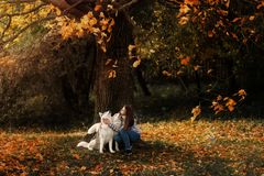 Girl plays with her dog in fallen autumn leaves. Girl plays with her husky dog in fallen autumn leaves royalty free stock photo
