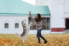 Girl plays with her dog in fallen autumn leaves. Girl plays with her husky dog in fallen autumn leaves stock image