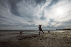A girl plays with her dogs on the beach. On a cold October day royalty free stock images