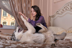 Girl plays with malamute Royalty Free Stock Photo