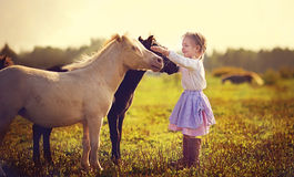 Girl and ponies Royalty Free Stock Photo