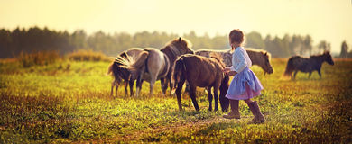Girl and ponies Royalty Free Stock Image