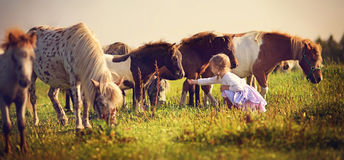 Girl and ponies Stock Photos