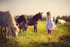 Girl and ponies Stock Images