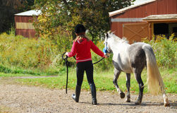 Girl and pony. Young girl leading a white pony to stable
