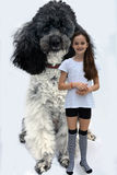 Girl and poodle Royalty Free Stock Photography