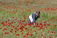 Girl with poppies collecting Stock Photo