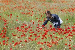 Girl with poppies collecting right Stock Photography