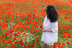 Girl in poppies field. But lonely young woman looking into the distance in a poppy field Royalty Free Stock Photo