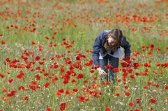 Girl with poppies on right Stock Photography
