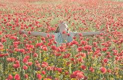 Girl in poppies Royalty Free Stock Images