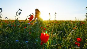 Girl on the poppy fields. Red flowers with green stems, huge fields. Bright sun rays. Closer to sunset. Photo shoot model. Large flower buds. Blue sky and royalty free stock photo