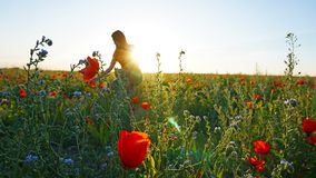 Girl on the poppy fields. Red flowers with green stems, huge fields. Bright sun rays. Closer to sunset. Photo shoot model. Large flower buds. Blue sky and stock image