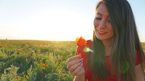 Girl on the poppy fields. Red flowers with green stems, huge fields. Bright sun rays. Closer to sunset. Photo shoot model. Large flower buds. Blue sky and royalty free stock photography