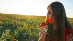 Girl on the poppy fields. Red flowers with green stems, huge fields. Bright sun rays. Closer to sunset. Photo shoot model. Large flower buds. Blue sky and royalty free stock photos
