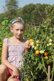 Girl poses in tomatoes garden Royalty Free Stock Photography