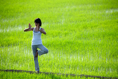 Girl Practicing Yoga,standing In Paddy Field Stock Images
