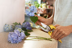 Girl prepares flowers for cutting  stems Royalty Free Stock Photography