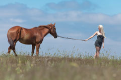 Girl pulling gelding. Young blonde woman in polka-dot dress holding the reins of brown horse Royalty Free Stock Image