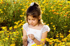 Girl Pulls Petals off a Wildflower. A little girl sits quietly in a field of wild African Daisies and pulls petals from a single flower. She is focusing intently Stock Photo
