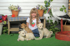 Girl with puppies Royalty Free Stock Image