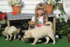 Girl with puppies Royalty Free Stock Photos