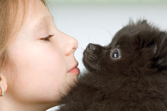 The girl with the puppy. Of the spitz-dog Stock Images