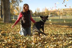 Girl and puppy. Young woman and her German Shepherd puppy play in fall leaves Stock Photos