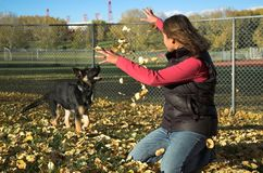 Girl and puppy. Young woman and her German Shepherd puppy play in fall leaves Stock Photography