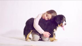 Girl and puppy of a bernese shepherd dog. Girl sitting with a puppy of a bernese shepherd dog on a white background. She hugging the puppy stock video footage