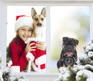 Girl and  puppy, Christmas Royalty Free Stock Photos