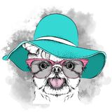 Girl puppy in a hat. Yorkshire Terrier. Vector illustration. A Girl puppy in a hat. A Yorkshire Terrier. Vector illustration Royalty Free Stock Photography