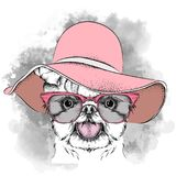 Girl puppy in a hat. Yorkshire Terrier. Vector illustration. A Girl puppy in a hat. A Yorkshire Terrier. Vector illustration Stock Photography