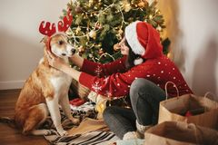 girl putting on cute dog reindeer antlers on background of golden beautiful christmas tree with lights in festive room. doggy wit royalty free stock photos