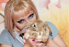 Girl and pygmy rabbit Stock Images
