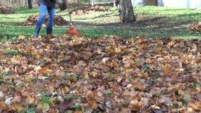 Girl rake autumn leaves stock footage