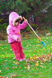 Girl raking leaves. Young girl raking leaves during an autumn morning royalty free stock photography